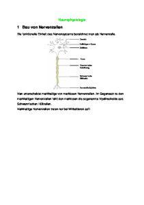 1 Bau von Nervenzellen