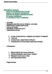 1. Mieloencefalitis equina por protozoos 2. Mieloencefalopatía vasculitis por Herpes I 3. Mielopatía focal toraco-lumbar 4. Meningoencefalomielitis