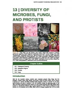 13 DIVERSITY OF MICROBES, FUNGI, AND PROTISTS