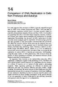 14 Comparison of DNA Replication in Cells from Prokarya and Eukarya