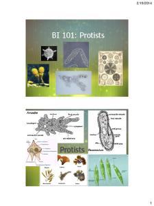 2014. BI 101: Protists. Protists
