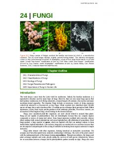 24 FUNGI. Chapter Outline. Introduction