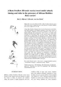 A Barn Swallow Hirundo rustica roost under attack: timing and risks in the presence of African Hobbies Falco cuvieri