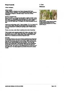 A. Chev. Meliaceae. Khaya ivorensis. African mahogany