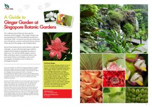 A Guide to Ginger Garden at Singapore Botanic Gardens