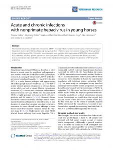 Acute and chronic infections with nonprimate hepacivirus in young horses