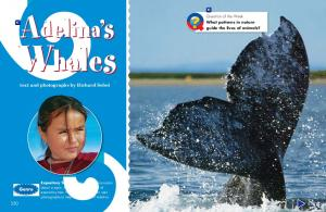 Adelina s. Whales. text and photographs by Richard Sobol