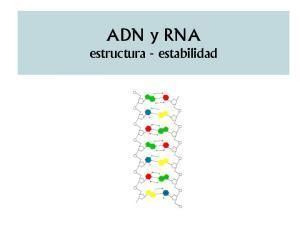 ADN y RNA estructura - estabilidad