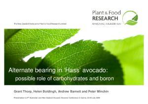 Alternate bearing in Hass avocado: