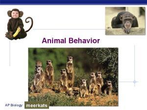Animal Behavior. AP Biology. meerkats