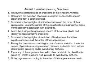 Animal Evolution (Learning Objectives)