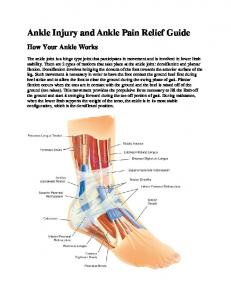Ankle Injury and Ankle Pain Relief Guide How Your Ankle Works