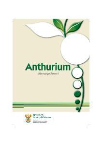 Anthurium (flamingo flower)