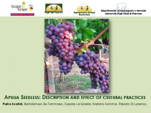 APULIA SEEDLESS: DESCRIPTION AND EFFECT OF CULTURAL PRACTICES