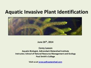 Aquatic Invasive Plant Identification