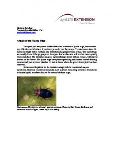 Attack of the Yucca Bugs