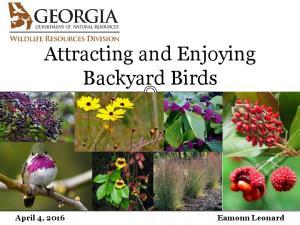 Attracting and Enjoying Backyard Birds