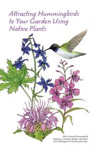 Attracting Hummingbirds to Your Garden Using Native Plants
