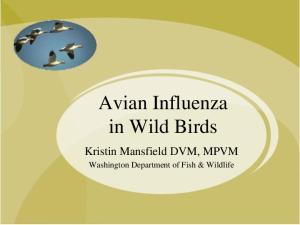 Avian Influenza in Wild Birds