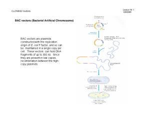 BAC vectors (Bacterial Artificial Chromosome)