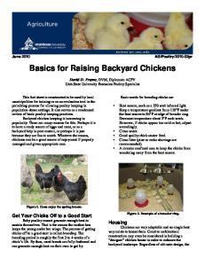 Basics for Raising Backyard Chickens
