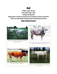 Beef. Body Condition Scoring
