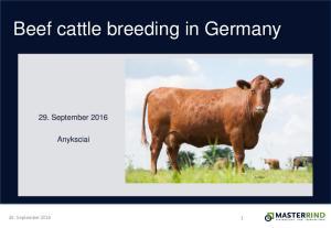 Beef cattle breeding in Germany