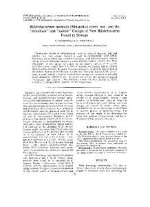 Bifidobacterium animalis (Mitsuoka) comb. nov. and the minimum and subtile Groups of New Bifidobacteria Found in Sewage