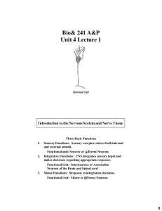 Bio& 241 A&P Unit 4 Lecture 1