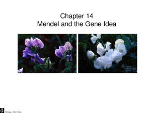Biology Kevin Dees. Chapter 14 Mendel and the Gene Idea
