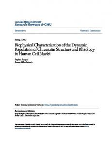 Biophysical Characterization of the Dynamic Regulation of Chromatin Structure and Rheology in Human Cell Nuclei