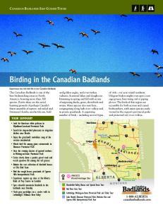 Birding in the Canadian Badlands