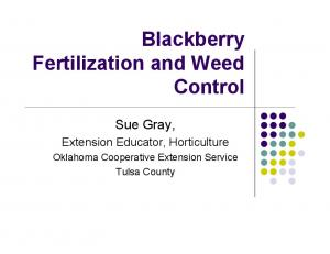 Blackberry Fertilization and Weed Control