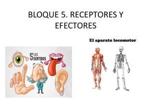 BLOQUE 5. RECEPTORES Y EFECTORES