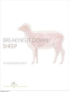 BREAKING IT DOWN: SHEEP