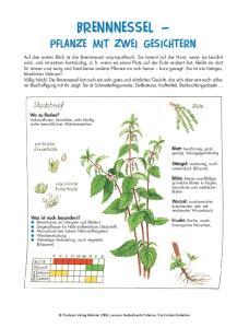 Brennnessel Pflanze mit zwei Gesichtern