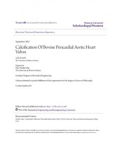 Calcification Of Bovine Pericardial Aortic Heart Valves