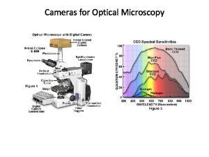 Cameras for Optical Microscopy