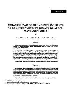 CARACTERIZACIÓN DEL AGENTE CAUSANTE DE LA ANTRACNOSIS EN TOMATE DE ÁRBOL, MANZANO Y MORA