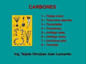 CARBONES. Ing. Tejada Hinojoza Juan Leonardo