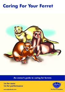 Caring For Your Ferret