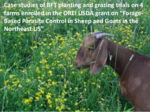 Case studies of BFT planting and grazing trials on 4 farms enrolled in the OREI USDA grant on Forage- Based Parasite Control in Sheep and Goats in