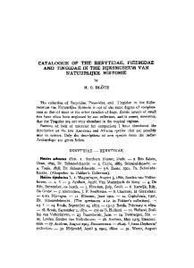 CATALOGUE OF THE BERYTIDAE, PIESMIDAE AND TINGIDAE IN THE RIJKSMUSEUM VAN NATUURLIJKE HISTORIE