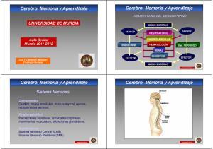 Cerebro, Memoria y Aprendizaje. Cerebro, Memoria y Aprendizaje. Cerebro, Memoria y Aprendizaje. Cerebro, Memoria y Aprendizaje UNIVERSIDAD DE MURCIA