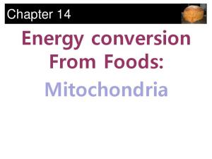 Chapter 14. Energy conversion From Foods: Mitochondria