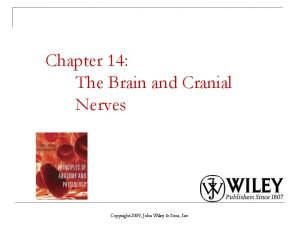 Chapter 14: The Brain and Cranial Nerves. Copyright 2009, John Wiley & Sons, Inc