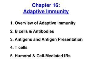 Chapter 16: Adaptive Immunity