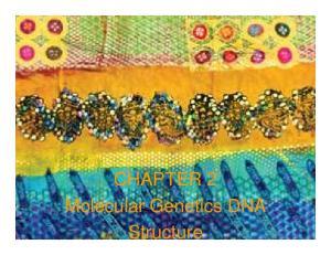 CHAPTER 2 Molecular Genetics DNA Structure