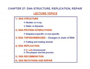 CHAPTER 27: DNA STRUCTURE, REPLICATION, REPAIR LECTURE TOPICS