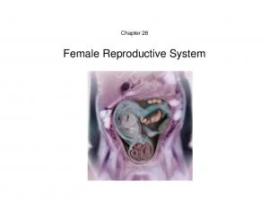 Chapter 28. Female Reproductive System